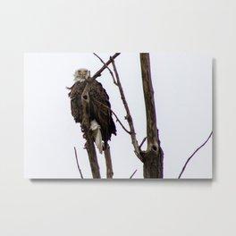 Kearney Eagle Metal Print