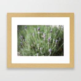 Lavendels Framed Art Print