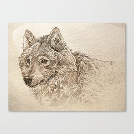 The Gray Wolf's Gaze Canvas Print