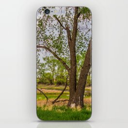 Cottonwoods at Lee's Farm 3 iPhone Skin