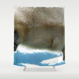 Spectecular Cute Grown Polar Bear Sitting On Ice Floe Picture From Beneath Ultra HD Shower Curtain