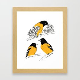 Oriole Bird Framed Art Print