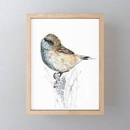 Mr Riroriro, the New Zealand Grey Warbler Framed Mini Art Print
