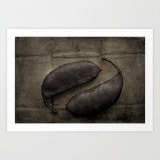 Kentucky Coffee Bean Seeds Art Print