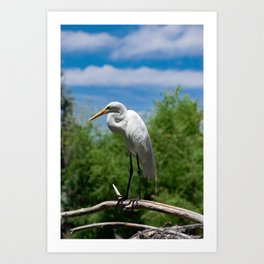 Great Egret Two - Utah Art Print