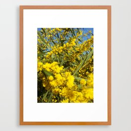 Mimosa 2 Framed Art Print