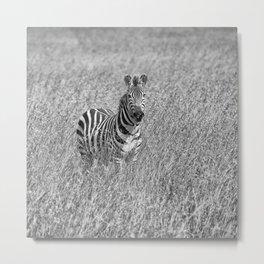 Zebra in high grass Metal Print