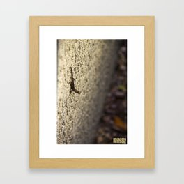 Brown Anole on Wall Framed Art Print