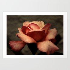 Rose old style Art Print