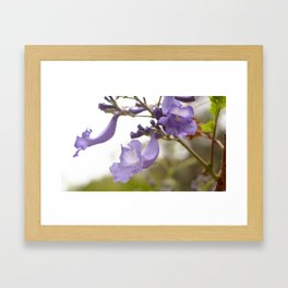 Lilac Explosion Framed Art Print