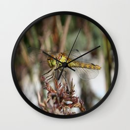 Brown Dragonfly On Husks With Garden Background Wall Clock