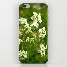 White Water Hemlock iPhone & iPod Skin