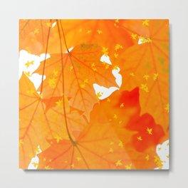 Fall Orange Maple Leaves On A White Background #decor #society6 #buyart Metal Print