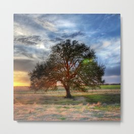 Lonely tree in a field Metal Print