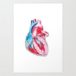 heart section Art Print