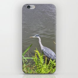 Beautiful Blue Heron iPhone Skin