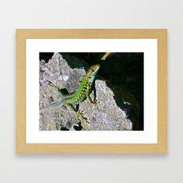 Capri Framed Art Print