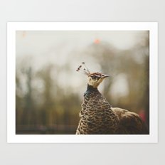 Little Miss Peahen Art Print