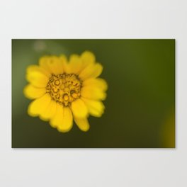 Yellow detail Canvas Print