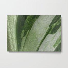 Abstract photo of a green calathea leaf Metal Print