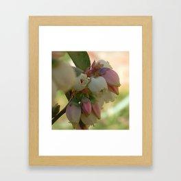 Blueberry Bells Framed Art Print