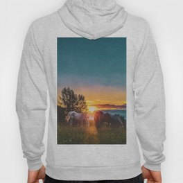 Horse Sunrise (Color) Hoody