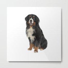 Bernese Mountain Dog. Drawing funny dog Metal Print