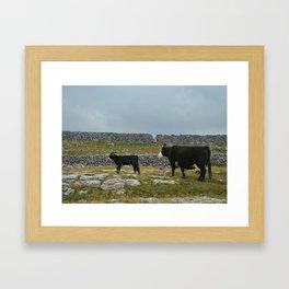 Cows in Ireland Framed Art Print