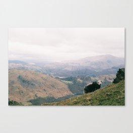 Resting sheep Canvas Print