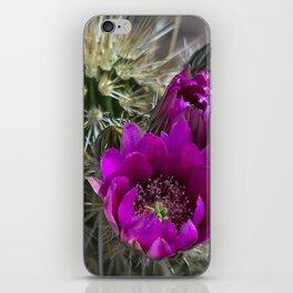 Pink Hedgehog Cactus iPhone Skin