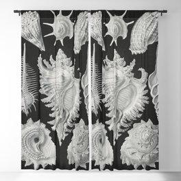 Prosobranchia-Dorderkiemen Schnecken from Kunstformen der Natur (1904) by Ernst Haeckel Blackout Curtain