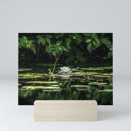Lone Lily Pad Mini Art Print