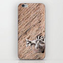 Ring-tailed lemur iPhone Skin