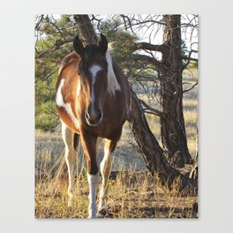 Curious Horse Canvas Print