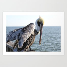 brown pelican, gulf pier, gulf shores, alabama Art Print