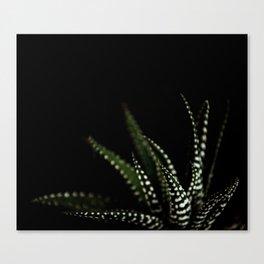 Haworthia Succulent plant cactus Canvas Print