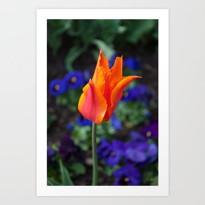Twisted Tulip Art Print