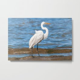 White Stork At Coast of River Beach, Montevideo, Uruguay Metal Print