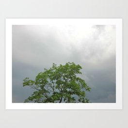Lonely As A Tree Art Print