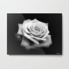 Pink Roses in Anzures 4 Dark Metal Print