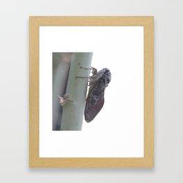Cicada Vector Framed Art Print