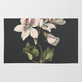 M. de Gijselaar - Pelargonium album bicolor (1830) Rug