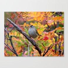 Bird in Autumn Foliage Canvas Print