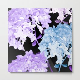 Hydrangea Branches On A Black Background #decor #buyart #society6 Metal Print