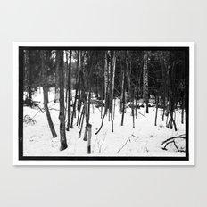 NORWEGIAN FOREST IX Canvas Print