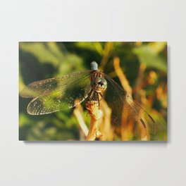 DragonFly at the Beach Metal Print