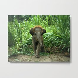 Elephant and Grass Metal Print