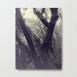 Italian forest Metal Print