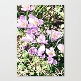 Hedgerow Canvas Print
