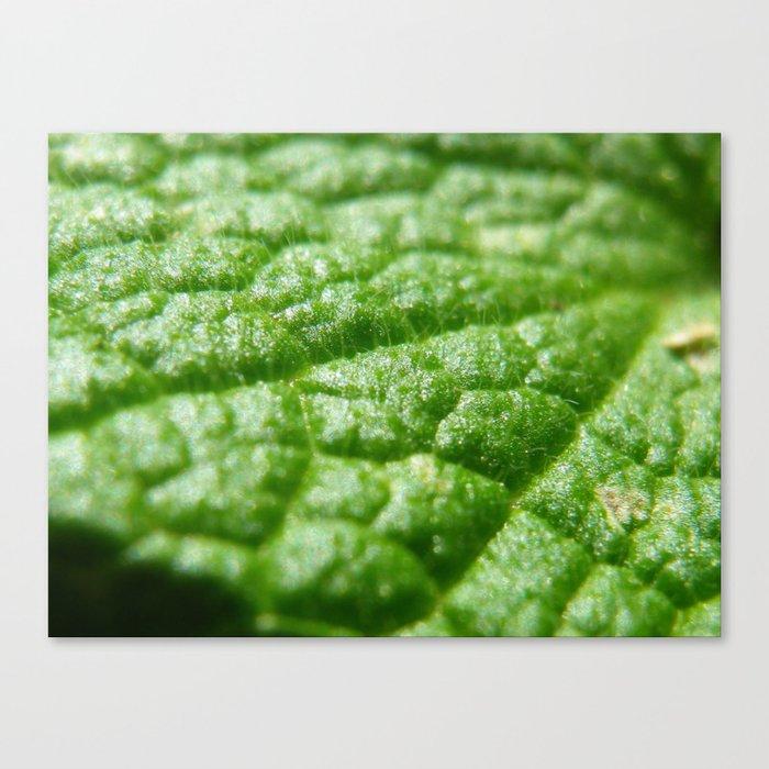 super green Canvas Print